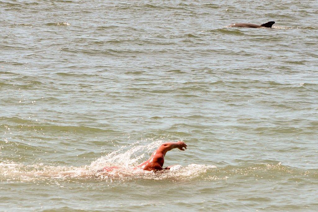 Ocean swimmers of different species