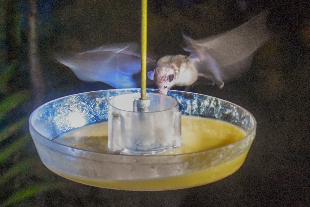 Feeding bat