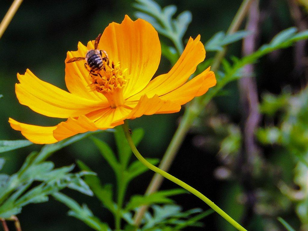 Pollination underway
